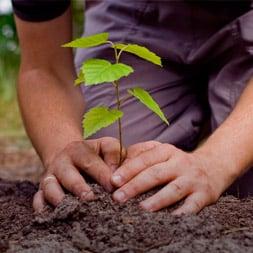 Planta un árbol o varios