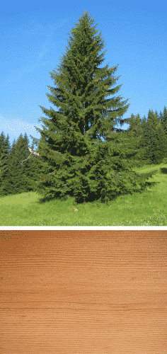 madera y arbol abeto