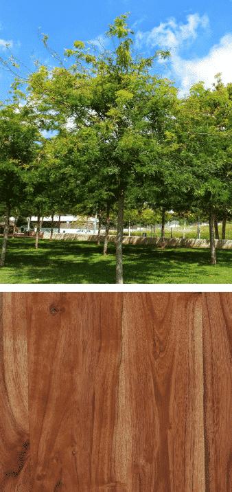 madera y árbol acacia