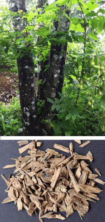 madera y árbol agar