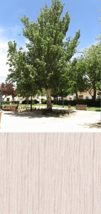 madera y árbol álamo