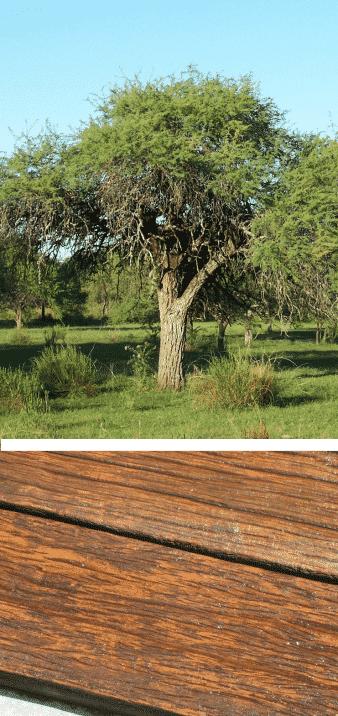 madera y árbol algarrobo