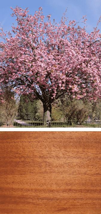 árbol y madera de almendro