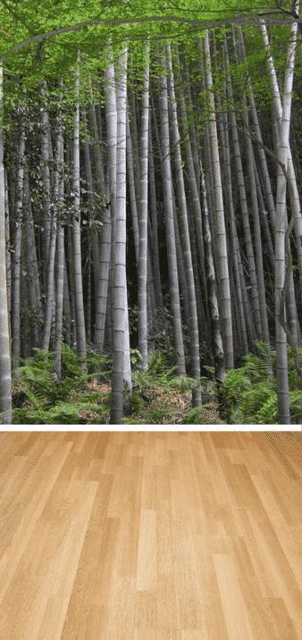 bambú planta