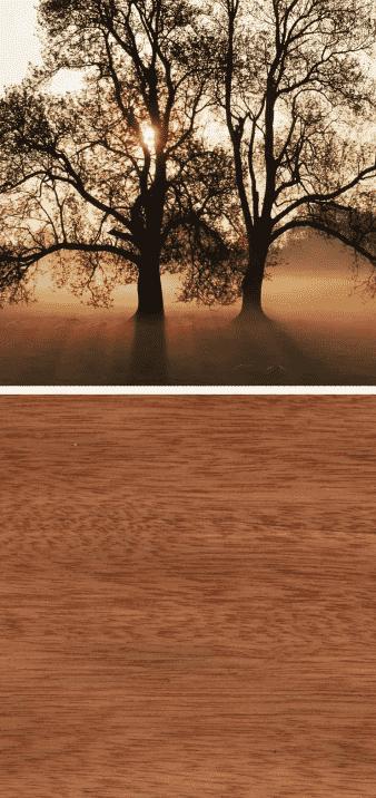 madera de bubinga arbol