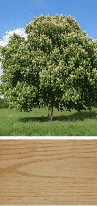 castaño, fruto árbol y madera