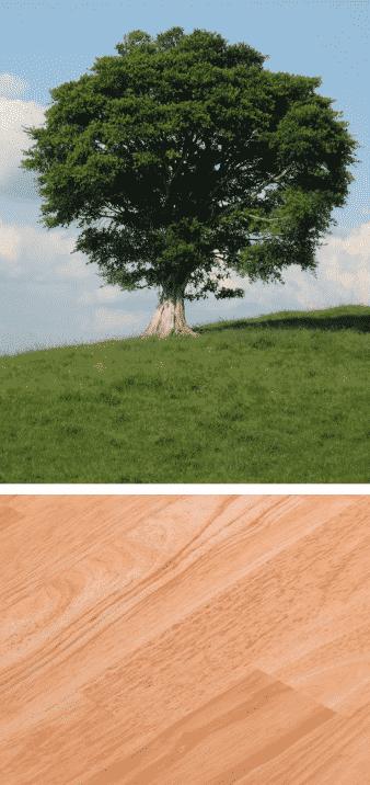 árbol del caucho madera