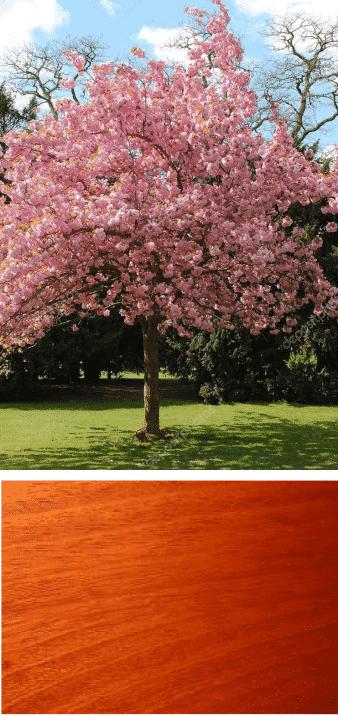 cerezo en flor madera