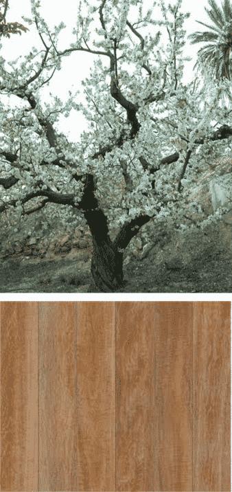ciruelo arbol y madera