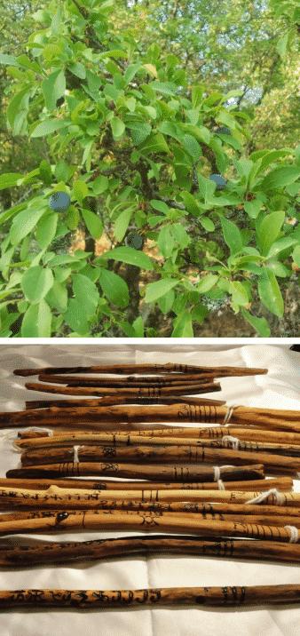 árbol y varitas de endrino
