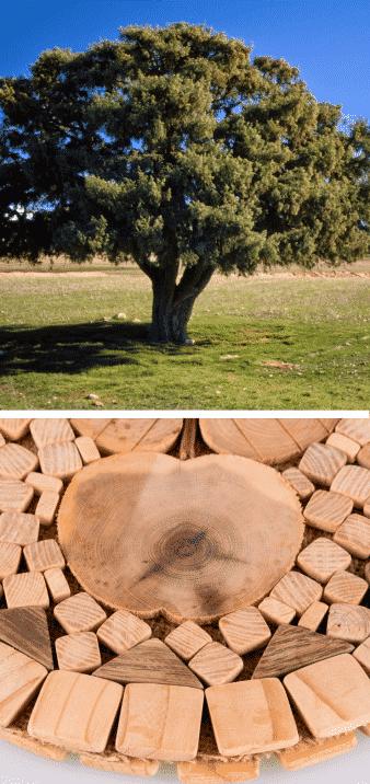 árbol del enebro y madera en forma de corazón