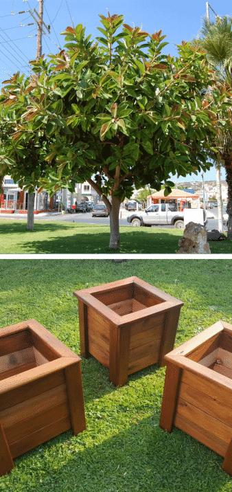 ficus árbol de madera