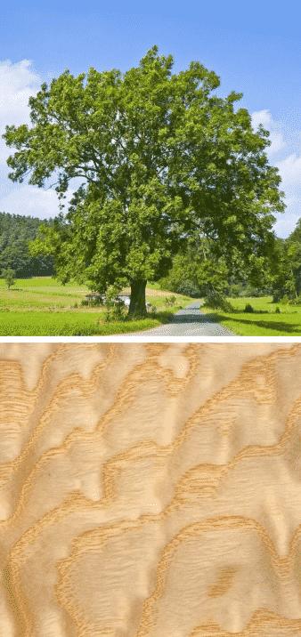 Árbol de fresno y árbol