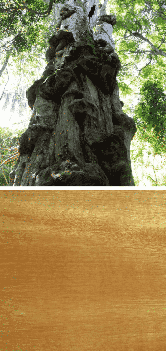 grapia arbol madera
