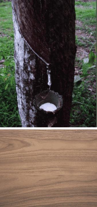 hevea madera árbol