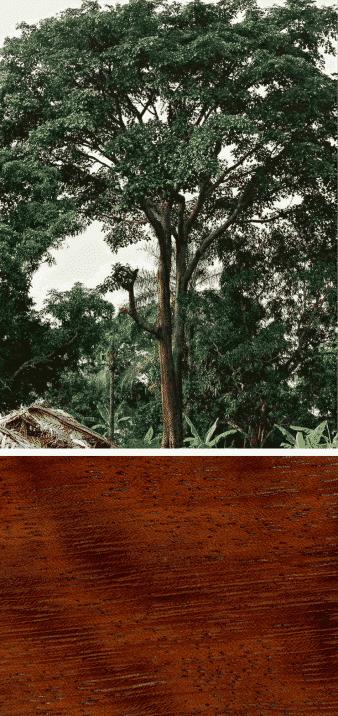 madera de iroko árbol