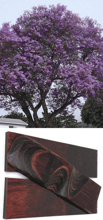 árbol jaracandá madera dura oscura