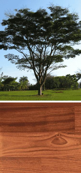 jatoba madera árbol