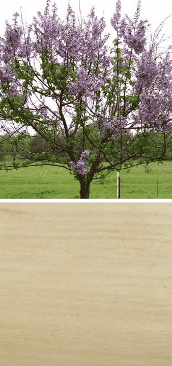 árbol del kiri madera flores
