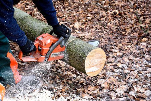 poda de la madera
