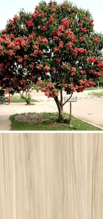 manzano fruto en flor madera