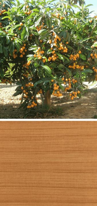 níspero árbol frutal que es la madera