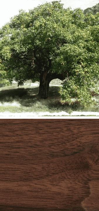 que es la madera nogal arbol