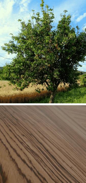 peral árbol frutal veteado madera