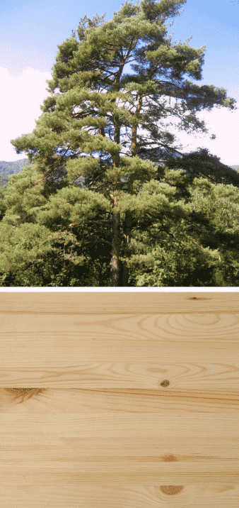 pino árbol, madera que es al madera