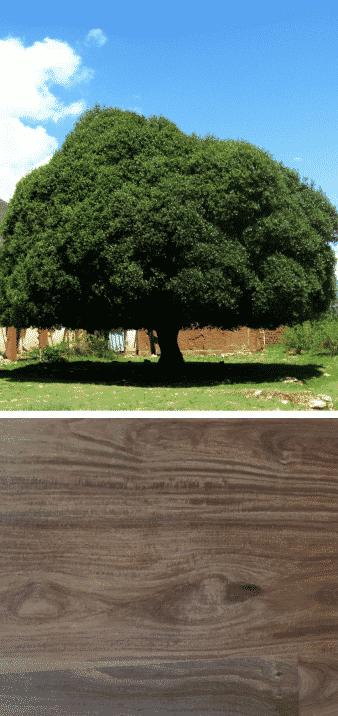 madera de quina arbol que es la madera
