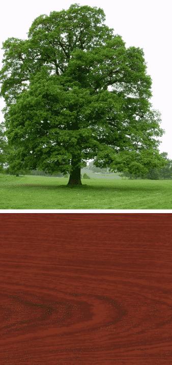 árbol roble madera