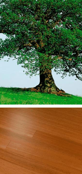 doussie árbol y madera