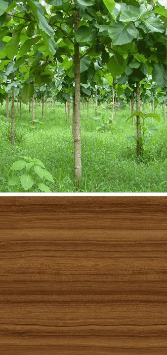 árbol de teca madera veteada tonalidad marrones