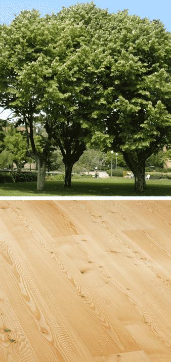tilo árbol madera parque marrón claro